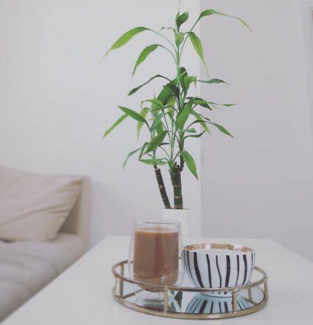 חלון פרחים ירוק צמחייה פסח ניקיון green home decor תמר צ'רנובילסקי